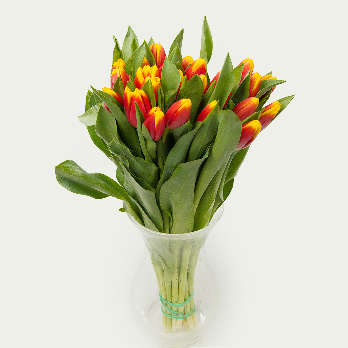 "Bouquet of 25 Tulips ""Scarlet"""