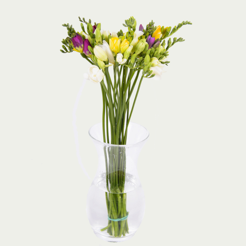 Freesia of different colors